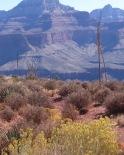 Rabbit Brush and Century Cactus