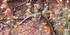 Desert Flowers 3
