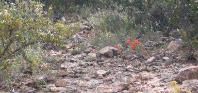 Desert Flowers 9