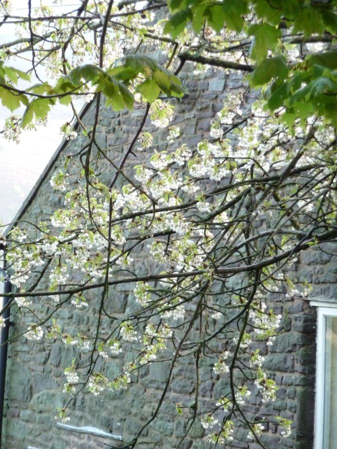 Glimmering Blossoms