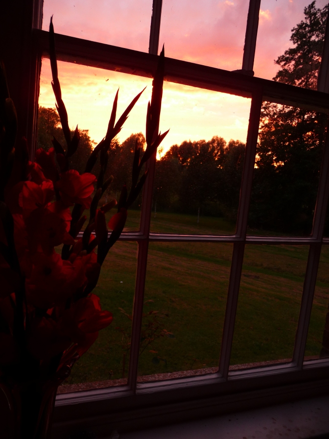 I love how the sunset picks up the colour of the Gladiolas.