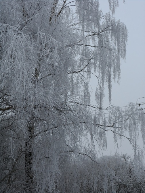 Hoar Frost on a Willow - take my breath away.
