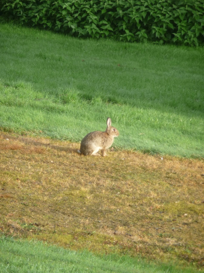 And Thumper watches his new friend walk away.