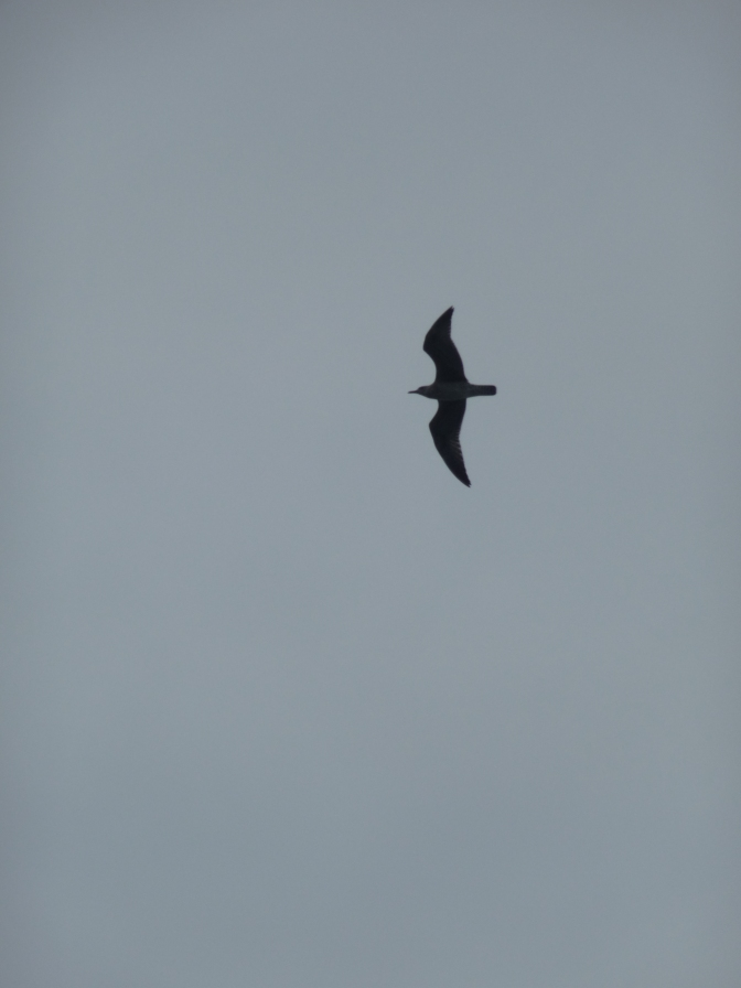 We must be nearing shore -  the birds return.