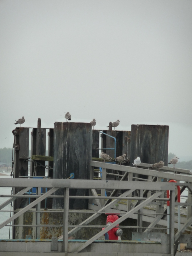 And we've followed the birds across the Channel. I wonder if they were still there as the troupes landed.