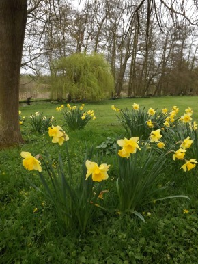 From the Daffs` Perspective