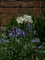 A Few Spring Flowers