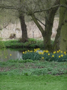 I have so enjoyed these Daffs by the pond. They`re reflections have been lovely fodder for photos.