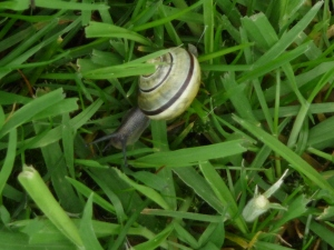 A snail in the grass.