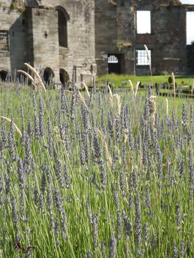 As we wander the grounds, the breeze jostles the delicate Lavender spikes into the Wheat (I think it's Wheat) freeing the soothing scent that lifts spirits and calms them at the same time.