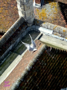 A gull lands with angel's wings atop a church.