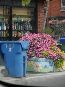 Near Palmerston, on the north side of Bloor, the utilitarian nature of the garbage bins converges, and clashes, with the beauty of the planter and bottles in the window.