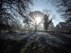 It is the life of the crystal, the architect of the flake, the fire of the frost, the soul of the sunbeam. This crisp winter air is full of it. ~John Burroughs, 1837-1921, Winter Sunshine