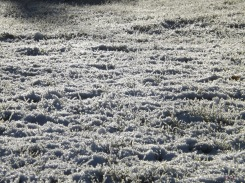 Smooth and clean and frosty white, The world looks good enough to bite. ~Ogden Nash, 1902-1971, Winter Morning Poem