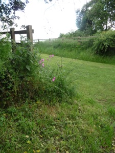 Just beyond, a tuft of Red Campion calls my name.