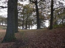 A man and his dog walk through Old John's Wood.