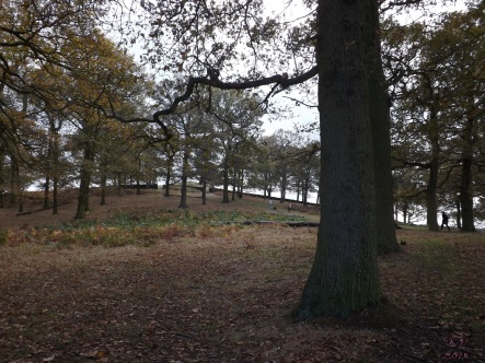 The walled woods in Bradgate Park - covers for pheasant shooting.