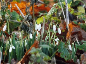 From the dregs of last year's detritus, from decay, comes beautiful new life to warm a cold day.