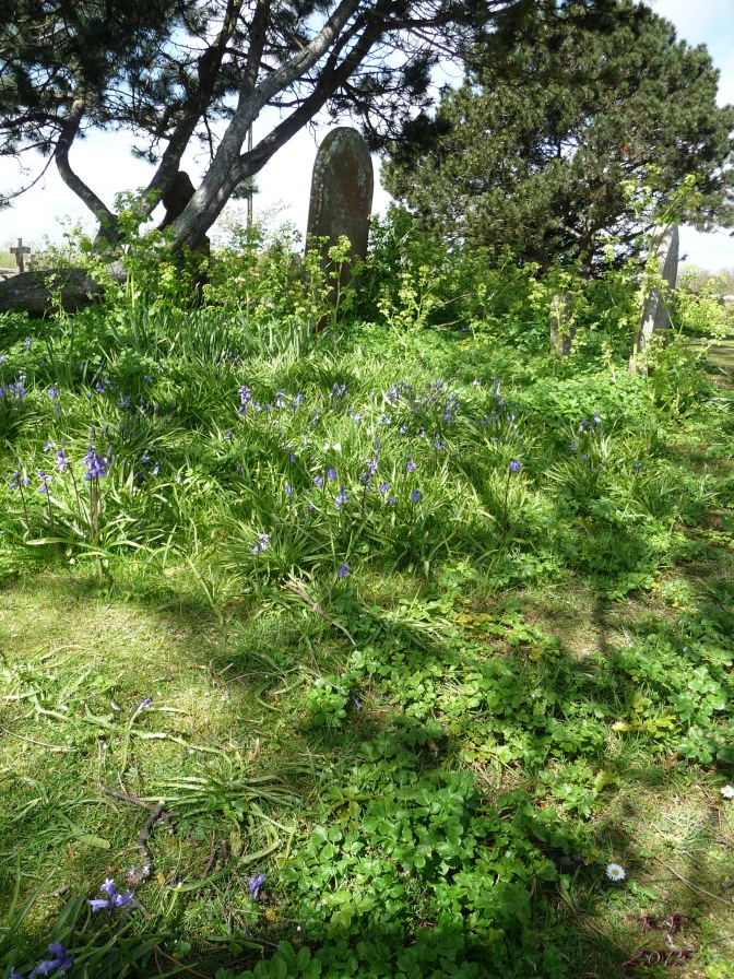 On the edge of an overgrown, yet tended, graveyard at Rye Harbour Church of the Holy Spirit.