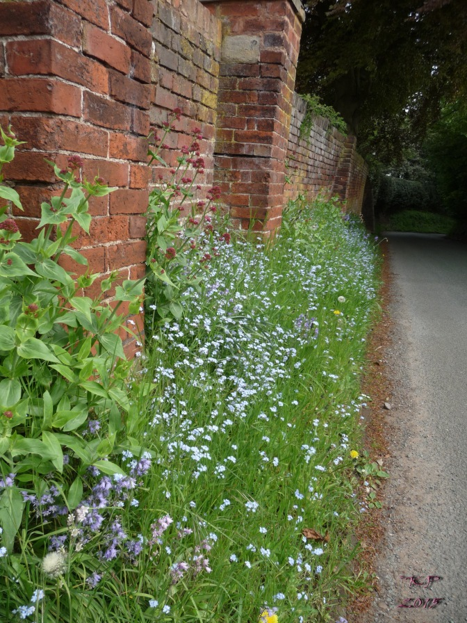 Forget-Me-Nots grow in profusion at the base of the garden wall - walls also provide heat as well as being lovely backdrops.