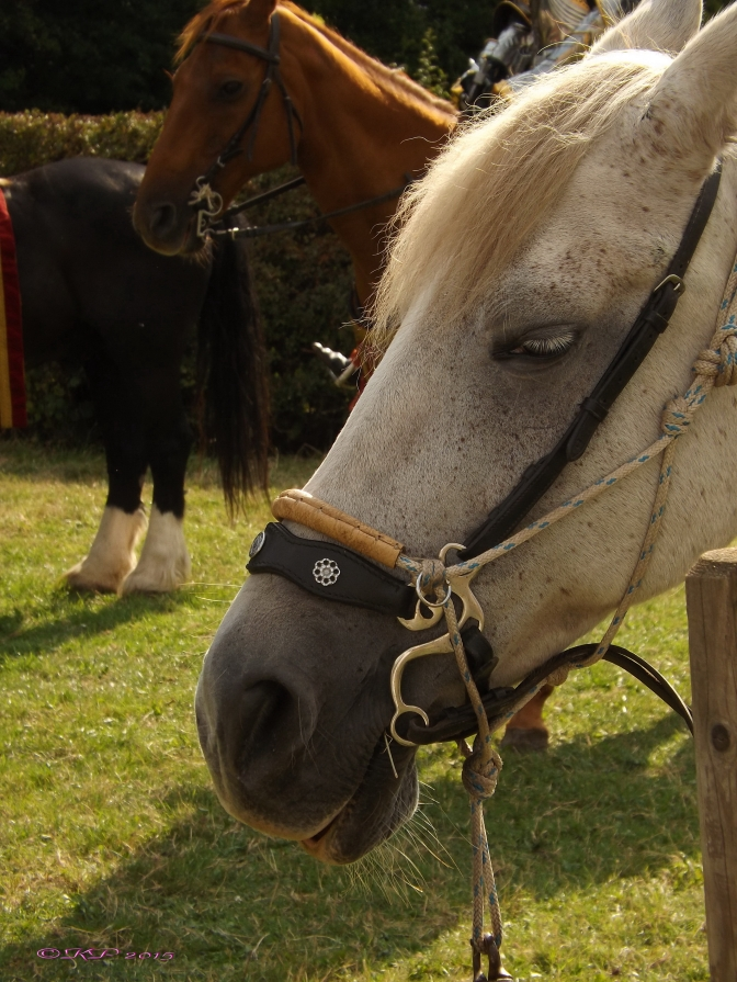 Equine Grin