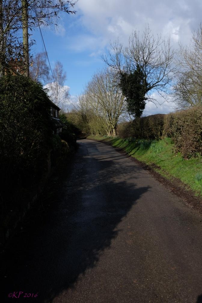 Silhouette Lane
