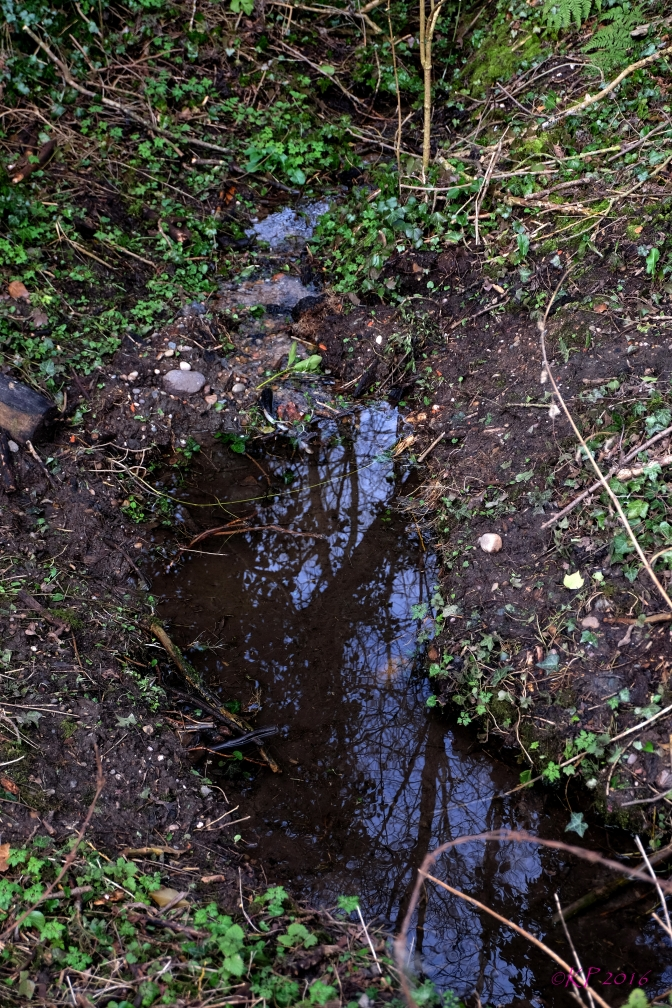 This is the first year this rivulet has been there; to my knowledge, anyway.