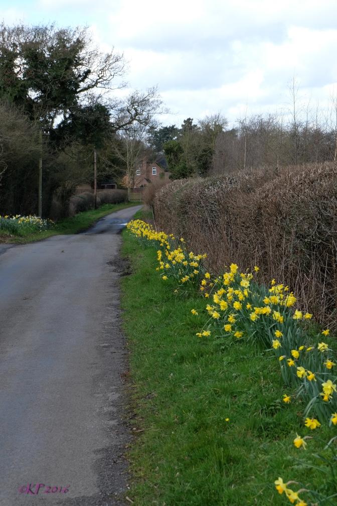 The Daffy Hedge