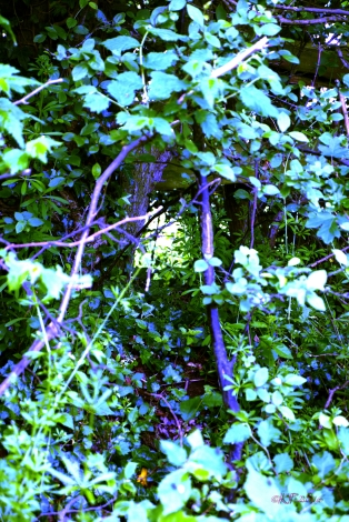 It's there, through the gap. Not close enough yet, to cross the Faeries' Border.