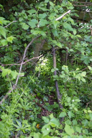 This is just an opening in a hedge ...