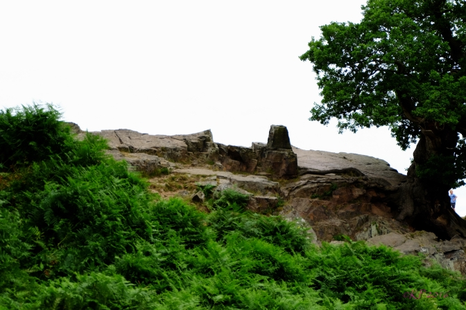 The rock is South Charnwood Diorite, the youngest of the volcanic rock that covers this area.