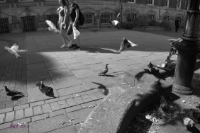 Over at Town Hall, I was momentarily distracted by flights of pigeons being fed and chased by a little boy.