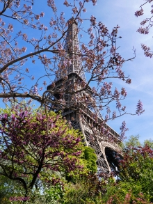 La Tour Eiffel and early Wysteria