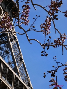 Early Wisteria mimics the openwork of the tower
