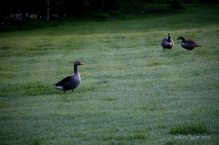 As Mr Greylag begins to walk to move, Alice and Ralph appear to confer in behind him.