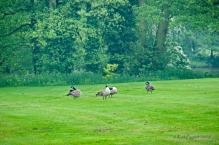 Four visitors preening.