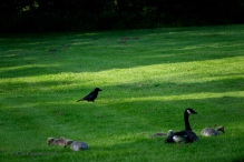 He scopes things out around the Goslings.