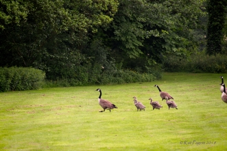 In the end, all four had to stop running.