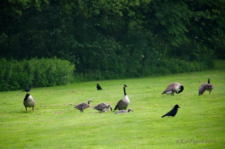 As the Crows seem to move off a bit, Dad's Lieutenant relaxes a bit and joins the others with Alice.