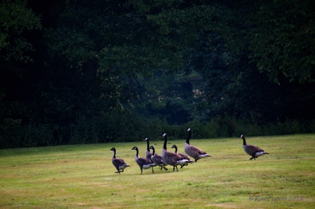 They move across the lawn with much more confidence.