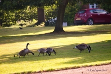 But they all make it up to the furthest corner of the lawn fairly easily.