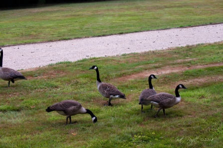 I think the two on the right are Goslings, possibly the Geminis.