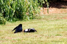 She backs off as White Wing prostrates himself further.
