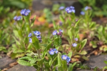 Forget-Me-Nots grow between the cobbles.